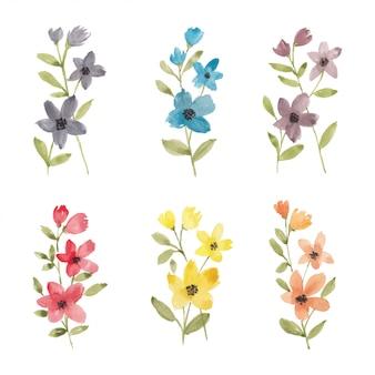 Collezione di acquerelli di illustrazione di fiori selvatici colorati