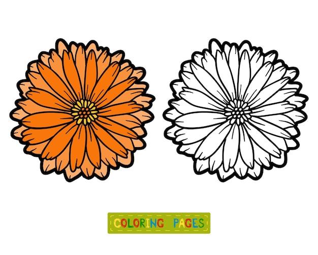 Libro da colorare per bambini, fiore calendula