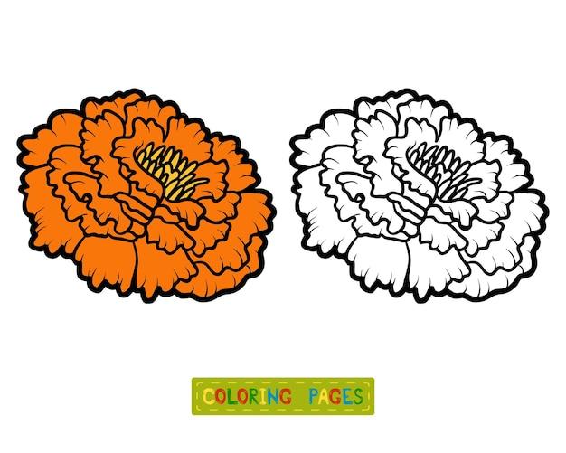 Libro da colorare per bambini, fiore marigold