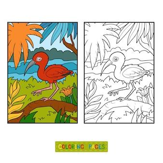 Libro da colorare per bambini, ibis scarlatto