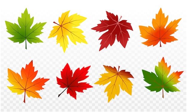Colori delle foglie di acero nella stagione autunnale e consistenza delle foglie di acero su sfondo trasparente