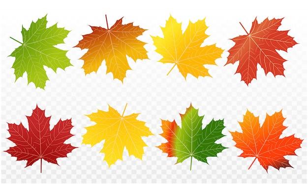 Colori delle foglie di acero nella stagione autunnale e consistenza delle foglie di acero