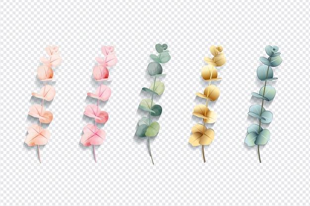 Foglie di eucalipto colorate insieme isolato su sfondo trasparente