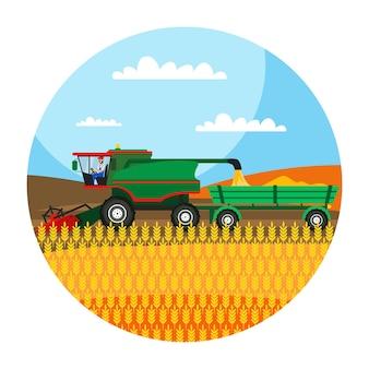 Mietitrebbia che lavora nell'illustrazione del campo, contadino che raccoglie grano, segale, chicchi d'orzo, tecnologia di coltivazione dell'orticoltura