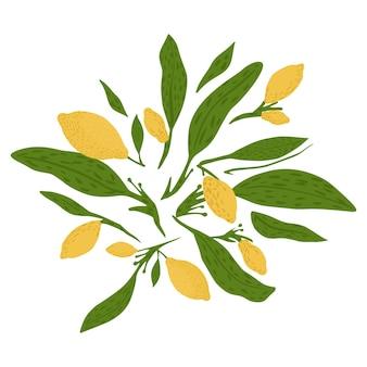 Composizione da limone, ramoscelli e fogliame su sfondo bianco. disegnato a mano in stile doodle.