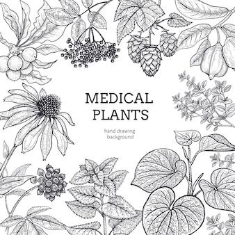 Composizione con erbe mediche e posto per l'iscrizione. incisione in stile vintage. disegno a mano. grafica in bianco e nero. illustrazione per testi e poster di medicina alternativa.