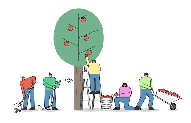 Concetto di raccolta. gruppo di persone che lavorano alla piantagione di mele