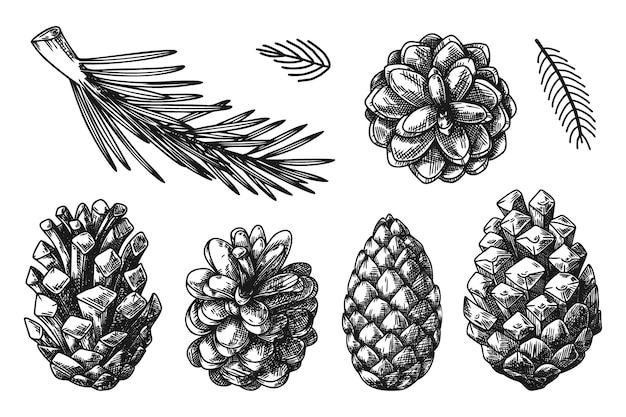 Coni e rami di piante differenti isolati su priorità bassa bianca. schizzo, illustrazione disegnata a mano