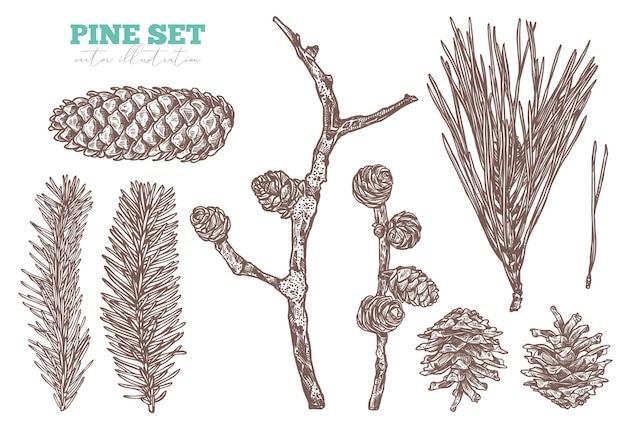 Insieme di abbozzo floreale disegnato a mano di conifere. rami e coni di pino, abete, abete rosso e larice