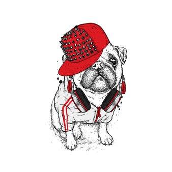 Cool pug in un berretto e cuffie