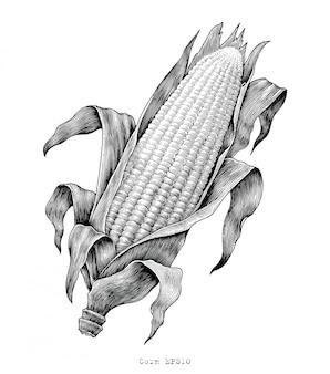 Illustrazione d'annata dell'incisione del disegno della mano del cereale