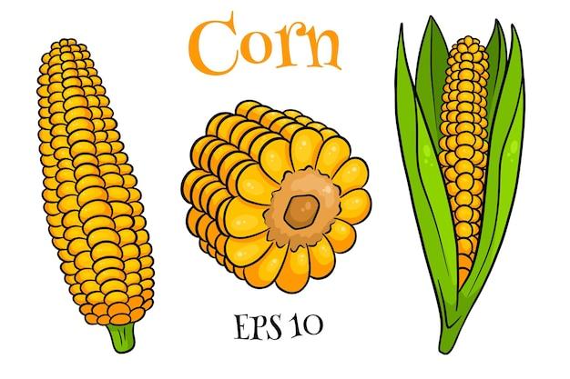 Set di mais. pannocchie di mais fresco con e senza foglie. in stile cartone animato. illustrazione vettoriale per design e decorazione.