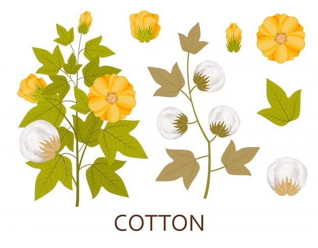 Piante di cotone con foglie, baccelli e fiori. illustrazione.