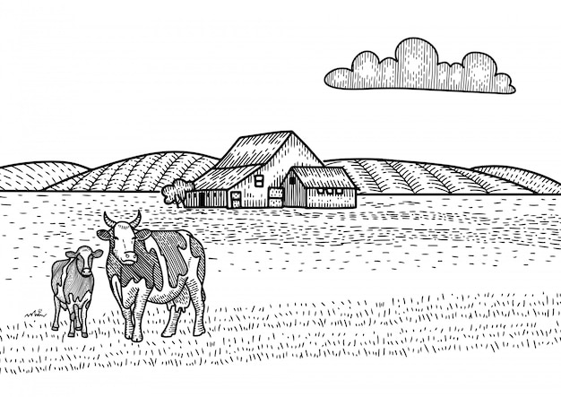 Mucca e vitello al pascolo sul prato. fattoria barn sullo sfondo. illustrazione di schizzo disegnato a mano nello stile dell'incisione. paesaggio di campagna.