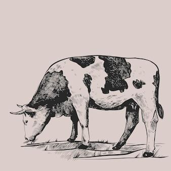 Mucca nel prato disegnato a mano in uno stile grafico illustrazione di incisione vettoriale vintage