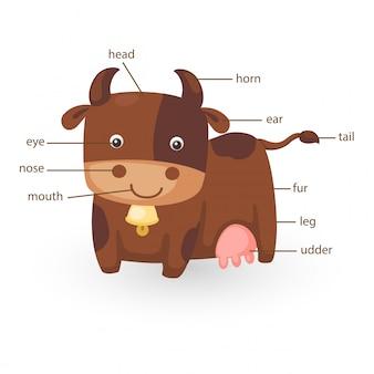 Parte del vocabolario della mucca del vettore del corpo