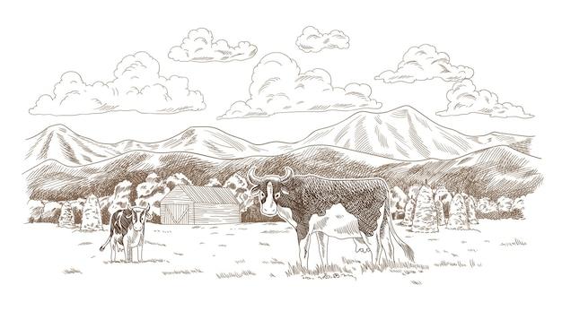 Mucche al pascolo sul prato. terreno agricolo disegnato a mano con illustrazione del fienile. paesaggio rurale