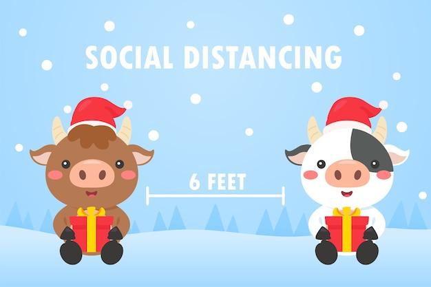 Le mucche lasciano spazi sociali con scatole regalo durante il giorno di natale invernale.