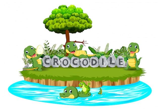 Il coccodrillo sta giocando insieme nel giardino