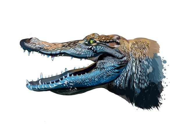 Ritratto di testa di coccodrillo da una spruzzata di acquerello, disegno colorato.