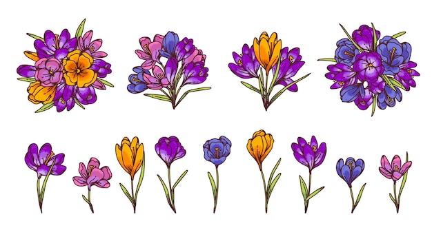 Fiori di croco e mazzi di fiori primaverili di primule per biglietto di auguri. illustrazione di schizzo di contorno