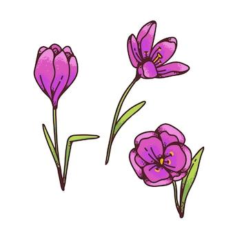 Crocus rosa zafferano fiori primule primaverili impostato per biglietto di auguri di design. illustrazione di schizzo di contorno