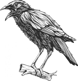Disegnato a mano d'annata dell'uccello del corvo