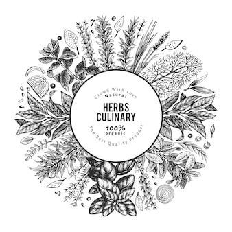 Illustrazione di erbe culinarie. illustrazione botanica vintage disegnata a mano. stile inciso.