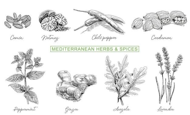 Erbe culinarie