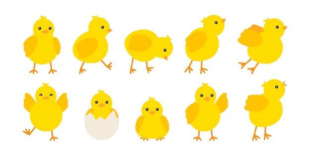 Polli svegli del bambino hanno impostato isolato su bianco
