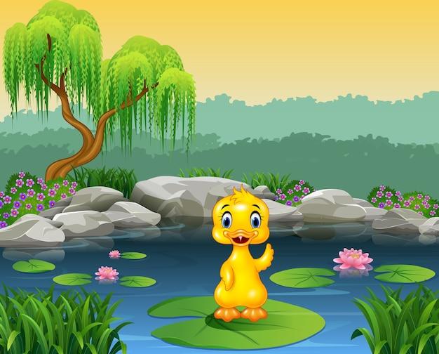 Anatra sveglia del bambino che fluttua sull'acqua del giglio