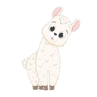 Cute baby llama.