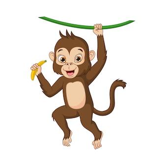 Scimmia sveglia del bambino che appende sulla filiale di albero. monkey holding banana