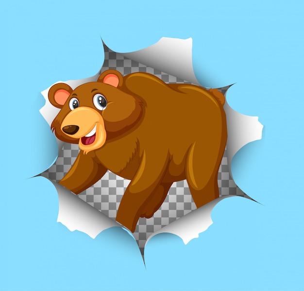 Simpatico orso che esce dal muro incrinato
