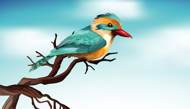 Uccello carino sul ramo di legno