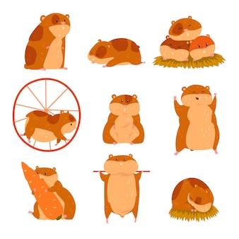 Set di caratteri di criceto simpatico cartone animato, animale divertente in diverse situazioni