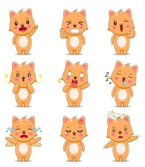 Simpatico gatto con espressione diversa