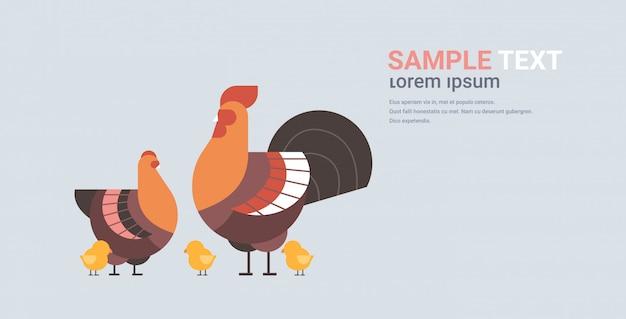 Concetto di azienda agricola di pollame degli animali domestici degli uccelli domestici del gallo e del pulcino del fumetto sveglio della famiglia del pollo