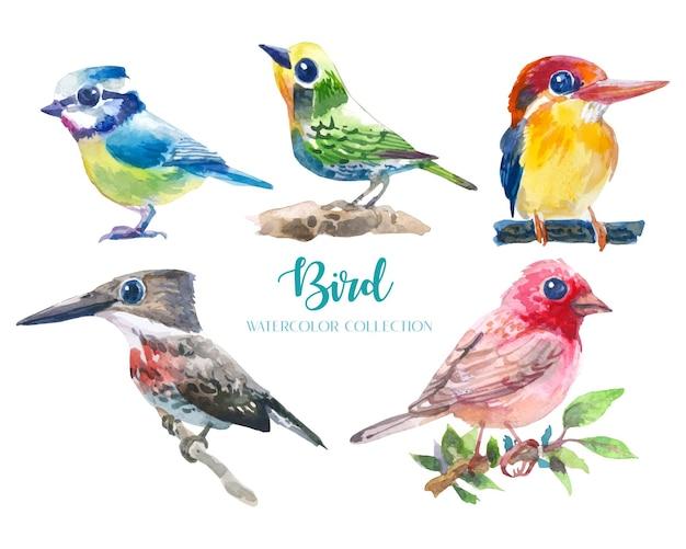 Insieme di raccolta dell'acquerello uccello carino e colorato (5 uccelli).