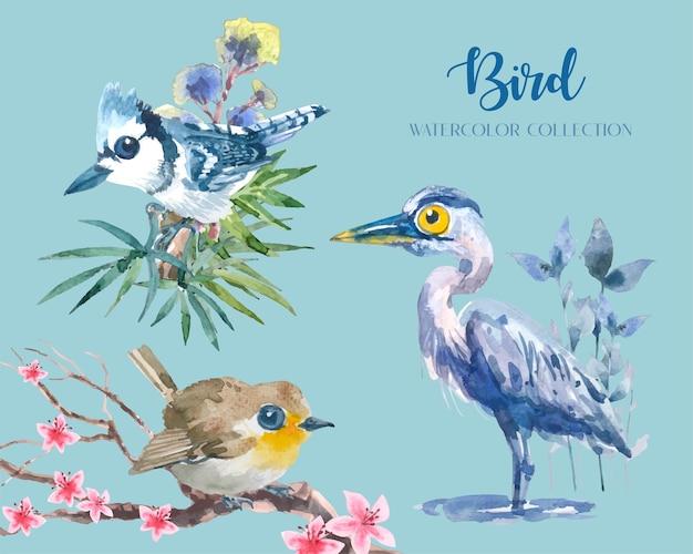 Uccello carino e colorato con set di raccolta acquerello ramo e fiore (3 uccelli).
