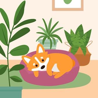 Simpatico cane corgi che dorme sul letto del cuscino in soggiorno con piante di casa