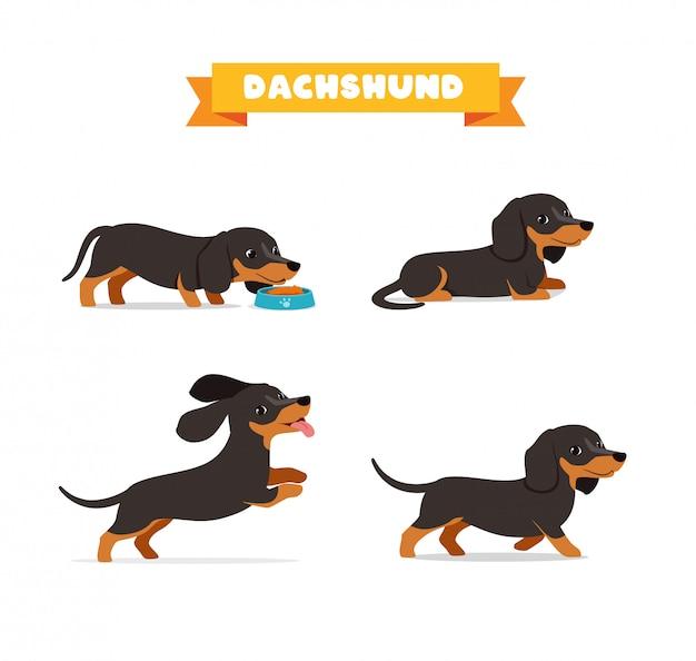 Simpatico animale domestico cane bassotto con molti set di fasci di pose