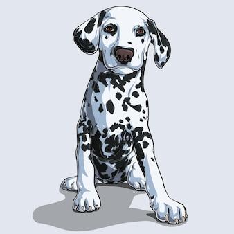 Carino cane dalmata seduto isolato