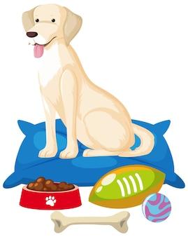Cane carino con elementi di giocattolo per cani su sfondo bianco