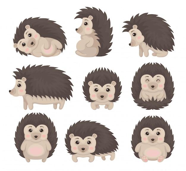 Istrice sveglio in varie pose fissate, illustrazione adorabile del personaggio dei cartoni animati del pungente animale su un fondo bianco Vettore Premium