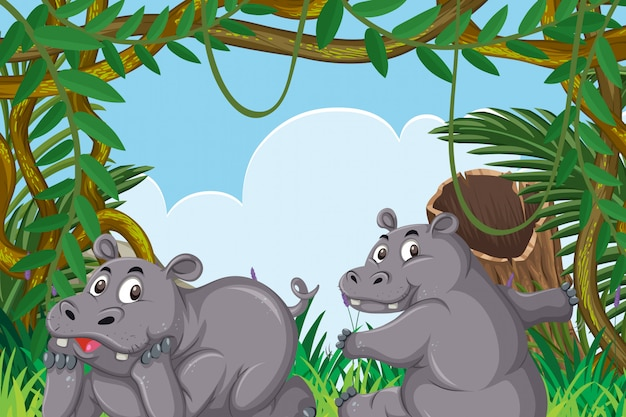 Simpatici ippopotami nella scena della giungla