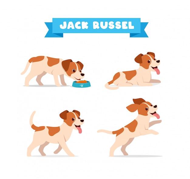 Carino jack russel cane animale domestico con molti set di bundle di posa