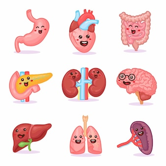 Carino kawaii forte felice umano sano forte set di organi. disegno dell'icona dell'illustrazione del personaggio dei cartoni animati. isolato su sfondo bianco