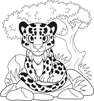 Carino leopardo