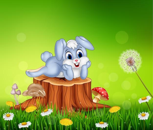 Piccolo coniglietto sveglio sul ceppo di albero nella priorità bassa di stagione estiva